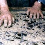 schoonmaken met houtkrullen